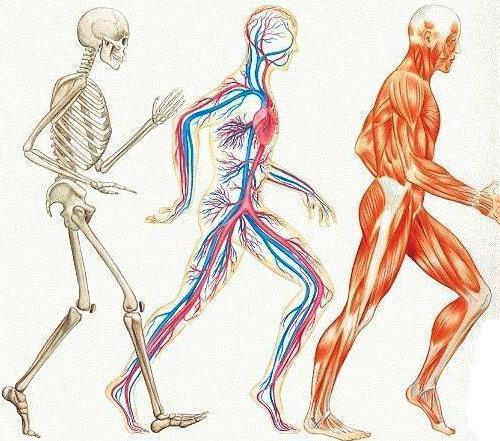 external image cuerpo-humano.jpg